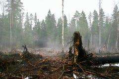Nach einem Feuer im Wald Stockfoto