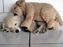 Nach einem guten Tag von Entdeckungen und von Unsinn, schläft der kleine Welpe mit seiner Decke lizenzfreie stockfotografie