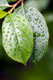 Nach einem Regen Stockbild