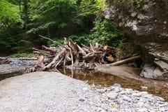 Nach Flut im Wald Stockfotos