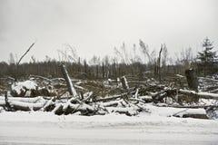 Nach Hurrikan Stockfoto