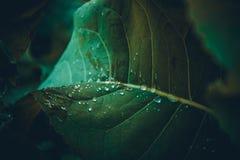 Nach Regen lizenzfreie stockfotografie