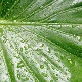 Nach Regen Stock Abbildung