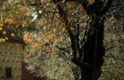 Nach Regen - Herbstfoto Lizenzfreie Stockfotos