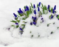 Nach Schneesturm Stockbilder