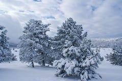 Nach Schneesturm d Stockfotografie