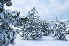 Nach Schneesturm f Lizenzfreies Stockbild