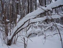 Nach schwere Schneefälle Stockfoto