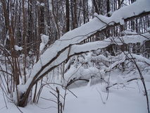 Nach schwere Schneefälle Lizenzfreie Stockbilder