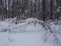 Nach schwere Schneefälle Stockbild