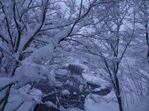 Nach schwerem Blizzard ein Schnee ganz über dem Baum im Park am bewölkten Smogtag Lizenzfreie Stockfotos