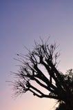 Nach Sonnenuntergang Lizenzfreie Stockbilder