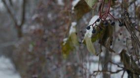 Nach starkem Nebel und niedrigen Temperaturen wird Zaun eingefroren stock footage