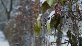 Nach starkem Nebel und niedrigen Temperaturen wird Zaun eingefroren stock video