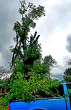 Nach Sturm? Kleinlaster-großer Baum lizenzfreie stockbilder