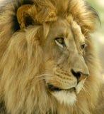 Nachdenken über wild lebende Tiere Stockbilder