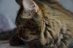 Nachdenkliche Katze Stockfoto