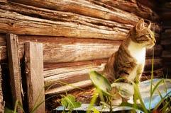 Nachdenkliche Katze auf hölzernem Hintergrund lizenzfreies stockfoto