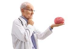 Nachdenklicher älterer Doktor, der ein Gehirnmodell betrachtet Lizenzfreies Stockfoto