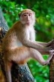 Nachdenklicher Affe sitzt auf einem Baumast Stockfotografie