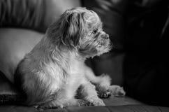 Nachdenklicher Hund Lizenzfreie Stockfotos