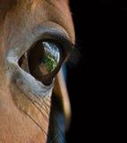 Nachdenkliches Auge eines Pferds. Lizenzfreies Stockfoto