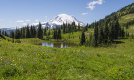 Naches Peak Loop Trail in Mt Rainier NP. Naches Peak Loop trail is one of the most popular and beautiful in Mt Rainier NP Stock Photo