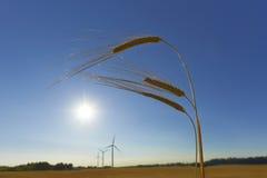 Nachhaltigkeit Lizenzfreies Stockbild