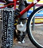 Nachlat Binyamin 2017 Tel Aviv. The lovely cat so beautiful happy cat stock photography