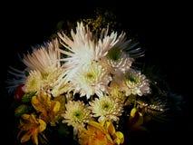 Nachmittag mit Blumen Stockfotos