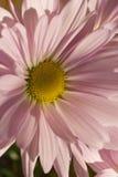 Nachmittags-Blume Stockfotografie