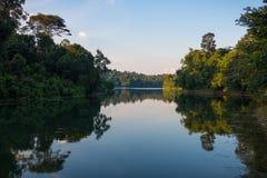 Nachmittagsreflexion an Macritchie-Reservoir lizenzfreie stockbilder