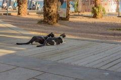 Nachmittagsrest Straßenkatzen stockfotos