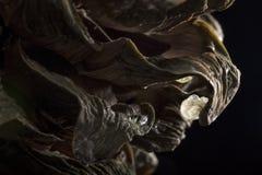 Nachricht der Kiefer Cones stockfoto