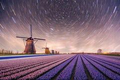 Nacht über Feldern von Narzissen Fantastischer sternenklarer Himmel und die Milchstraße Stockbilder