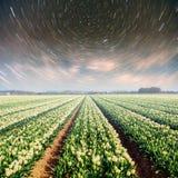 Nacht über Feldern von Narzissen Fantastischer sternenklarer Himmel und die Milchstraße Lizenzfreie Stockfotos