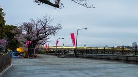 Nacht aan de tijdspanne van de dagtijd van het festival van de Kersenbloesem bij Sumida-rivier, Tokyo stock footage