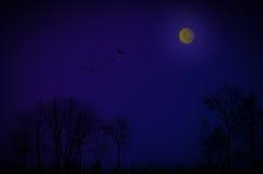 Nacht achtergrondconceptentrekvogels Stock Fotografie