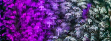 Nacht beleuchtet bokeh Regenschirmform, defocused bokeh Lichter, blurr Lizenzfreie Stockfotos