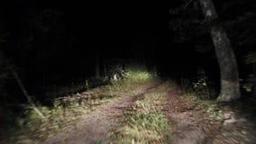 Nacht bosweg het Berijden bij nacht stock video