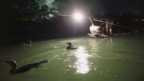 Nacht-China-Fischen mit Kormoran stock video