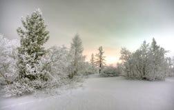 Nacht in de winterbos Royalty-vrije Stock Afbeeldingen