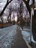 Nacht in de winterpark royalty-vrije stock afbeelding