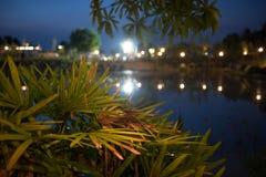 Nacht die in het park kamperen Stock Afbeelding