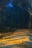 Nacht die van weg aan donker eng bos is ontsproten. Stock Afbeeldingen