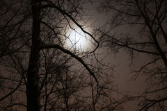 Nacht, donkere takken van bomen Royalty-vrije Stock Foto