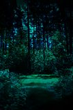 Nacht in een bos Stock Afbeelding