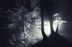 Nacht in einem dunklen mysteriösen Wald mit Nebel und Licht Stockbild