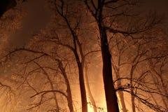 Nacht in einem nebelhaften Wald Lizenzfreies Stockfoto