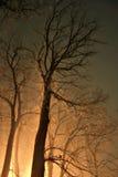 Nacht in einem nebelhaften Wald Stockfoto